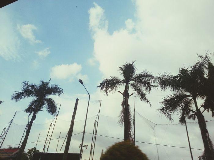 Palm Trees Good Colors Colorsplash