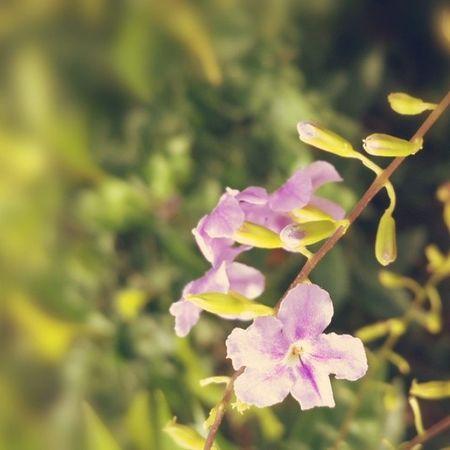 Splendid_flowers Topfleur Ptk_flowers Superb_flowers nature_obsession_flowers 9flower9
