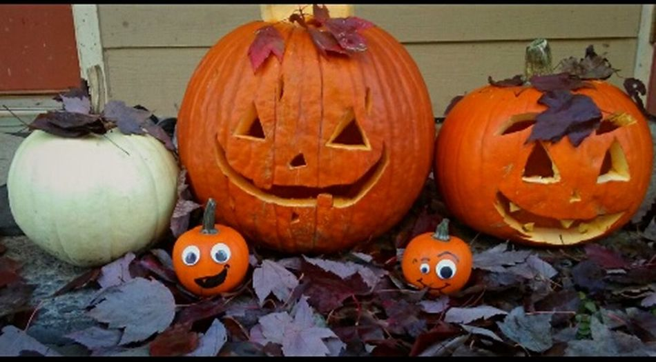 Pumpkin Halloween Celebration Anthropomorphic Face Orange Color Tradition Jack O' Lantern Autumn Holiday - Event Jack O Lantern Outdoors Close-up Fall Photography Fall Collection Essence Of October EyeEm Team Fall Is Here. Eyeem Market Getty Images Eyem Collection Vibrant Fall Colors Octobercolors Maple Leaf Display Nature Squash - Vegetable Be. Ready. Rethink Things