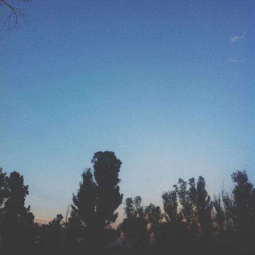 Arboles, anochecer