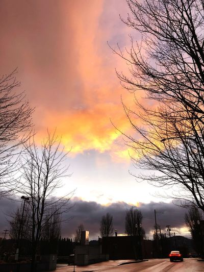 Sunset Bare Tree Tree Cloud - Sky Sky Orange Color Colour Your Horizn