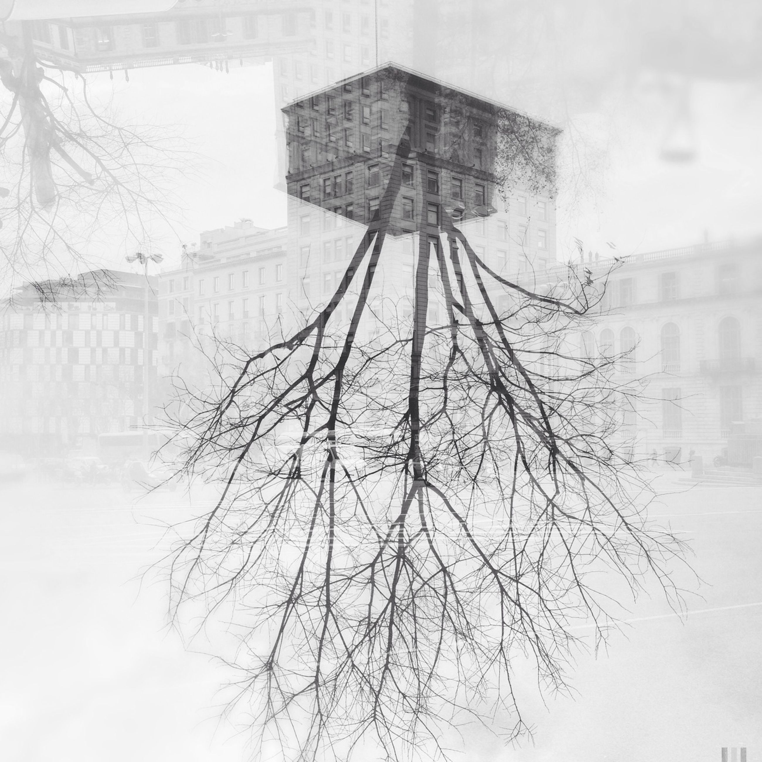 tree, water, fog, bare tree, lake, weather, winter, season, reflection, cold temperature, snow, day, tranquility, nature, built structure, foggy, architecture, building exterior, outdoors