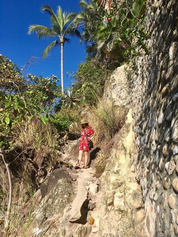 Myself nature walk One Woman Only Red Dress Nature Walk Nature Photography Nature On My Doorstep Palm Tree Stone Wall Blue Sky