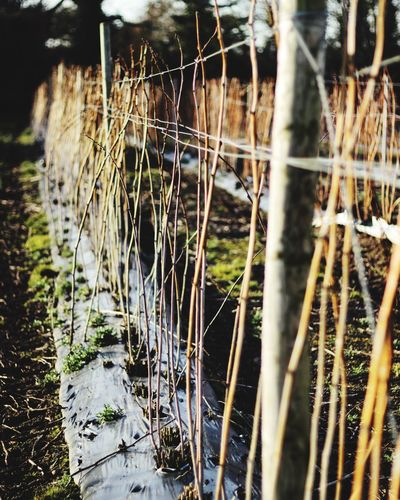 No People Nature Grass Outdoors Day Growth Close-up Plant Water Canon Canon600D Canoneos Canonphotography CanonEOS600D