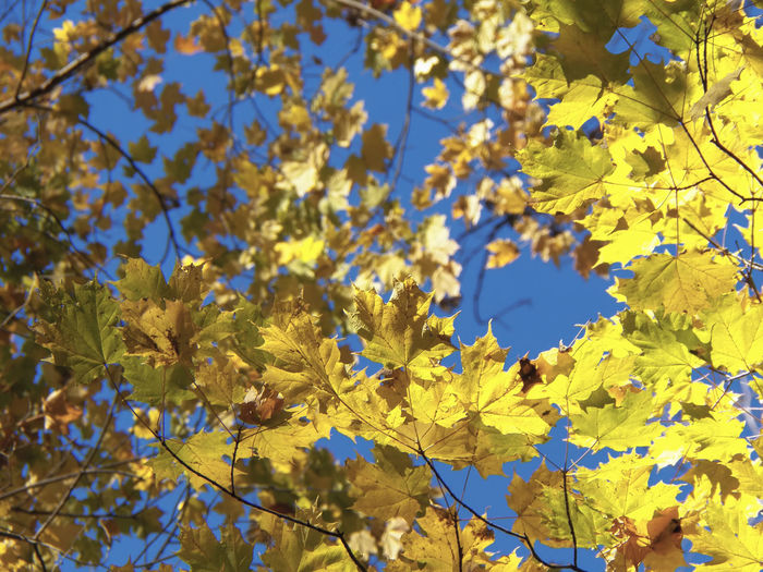 Tree Branch Plant Part Leaf Autumn Yellow Flower Change Sunlight Sky In Bloom Plant Life Twig Botany Fragility Pollen
