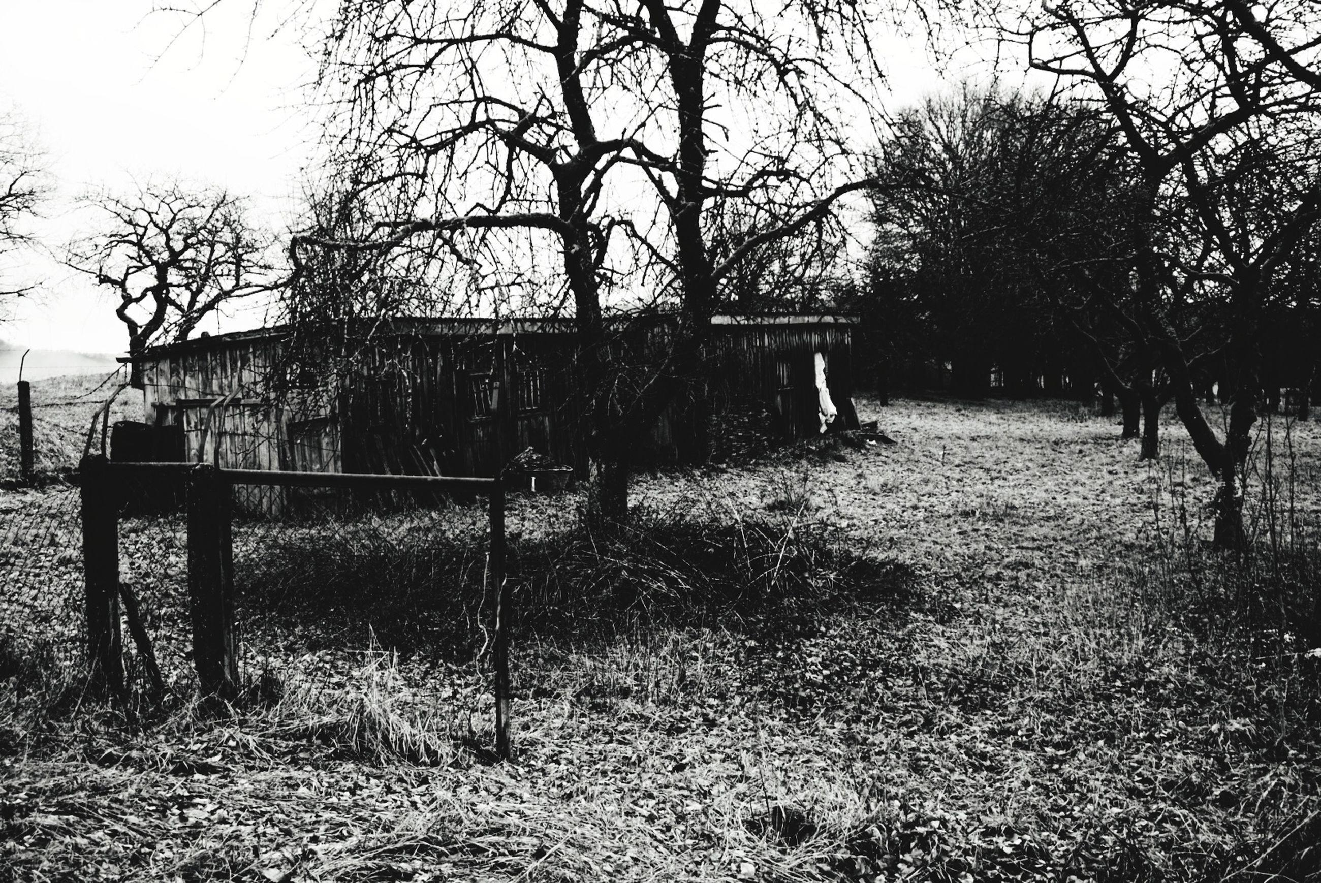 tree, plant, architecture, built structure, nature, no people, land, building exterior, day, sky, bare tree, field, building, abandoned, growth, outdoors, history, grass, old, branch, ruined
