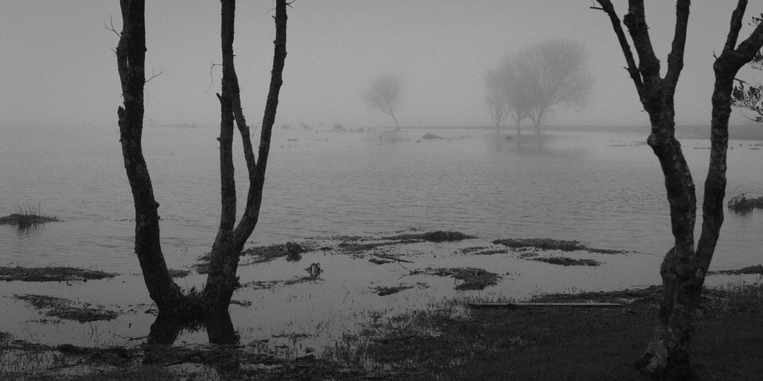 Beauty In Nature Foggy Lake Landscape Nature No People Rainy Tranquility Tree