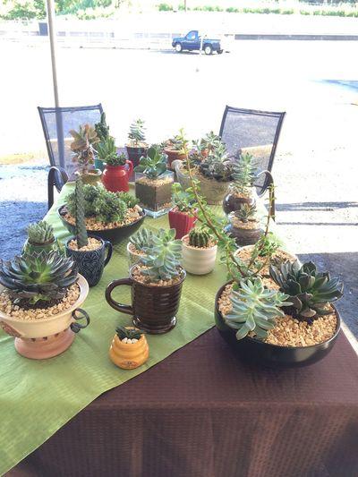 Cactus_maramia I Love Cactus EyeEm Cactus Cactus