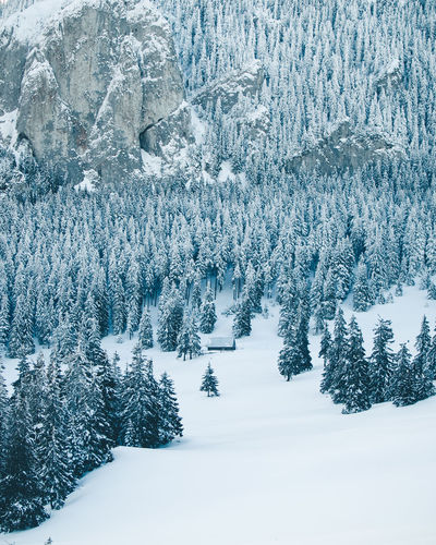 Beauty In Nature Cold Temperature Coniferous Tree Covering Environment Extreme Weather Forest Land Landscape Mountain Nature No People Non-urban Scene Outdoors Pine Tree Plant Scenics - Nature Snow Snowing Tranquil Scene Tranquility Tree White Color Winter WoodLand