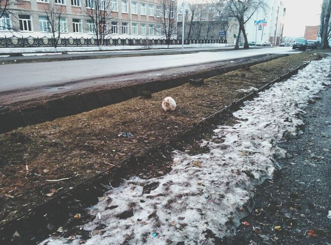 Lonely Cat Cat Lonely Morning Goodmorning Spring Russia Gloomyspring Beauty Darkness
