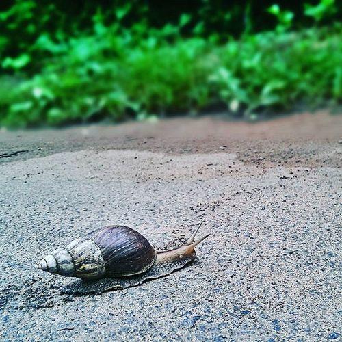 Snail's pace... Morningscenes Troddenpath