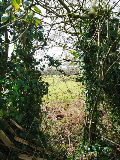 Rural Scene Countryside Country Life Green Plants Fence Gap In The Fence Check This Out Taking Photos Hello World Country Walk Countryside Life
