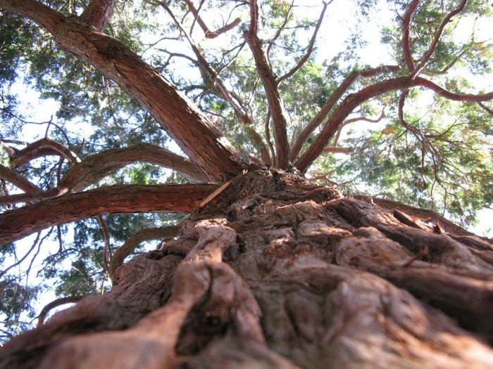 Crimea Tree Nature Nofilter