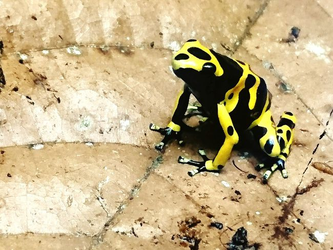 Frog Rainforest Frog Yellow Beautiful Animals