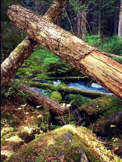 EyeEm TreePorn EyeEm Best Shots - Nature EyeEm Best Shots - Landscape EyeEm Tree Collection