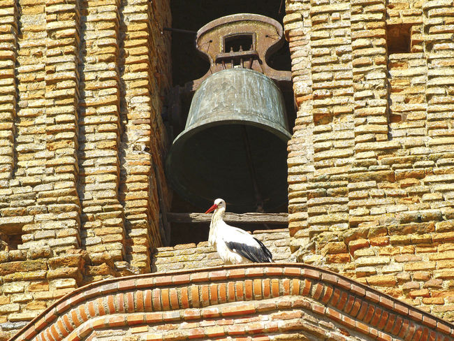 Ciconia ciconia - Stork in a belfry Animal Arch Architecture Architecture Bell Bird Brick Wall Building Exterior Built Structure Church Day Façade Fauna History Medieval Rural Rural Architecture Rural Landscape Rural Scene Stone Stork Window Ciconia Ciconia Ciconia