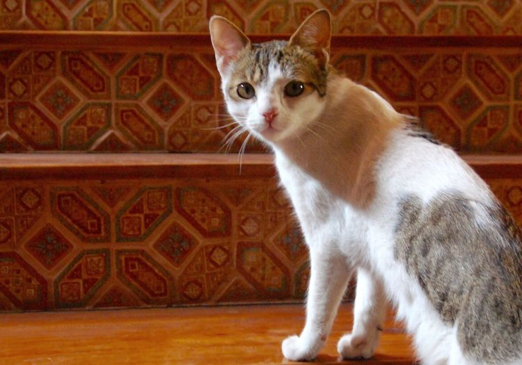 Portrait of cat sitting on steps