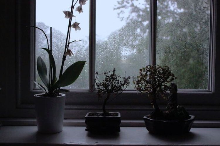 Rain and fat plants🎍🌱🌿🌧 Rain Rainy Days Nature Fat Plants Nature_collection Nature Photography Naturelovers Beauty In Nature Natural Beauty Plant Plants First Eyeem Photo Mypointofview Details Of My Life Water Window Potted Plant Growth Plant Tree Indoors  Window Sill Home Interior Nature No People Day Green Color Leaf Flower Close-up