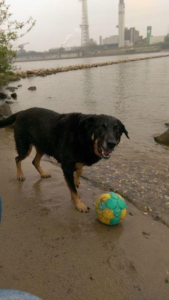 Dog Sand Water One Animal Barking Dog No People Grrrrrr  The Dog And Wilson