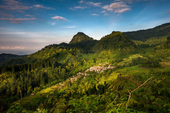 Tree Landscape Sky No People Green Color Agriculture Nature Rural Scene Sun Outdoors Sunset Beauty In Nature Scenics Forest Fruit Mountain Tea Crop Day Freshness Machu Picchu - Peru Mountains And Sky Mountain View Mountain Peak Machu Picchu Fullframe