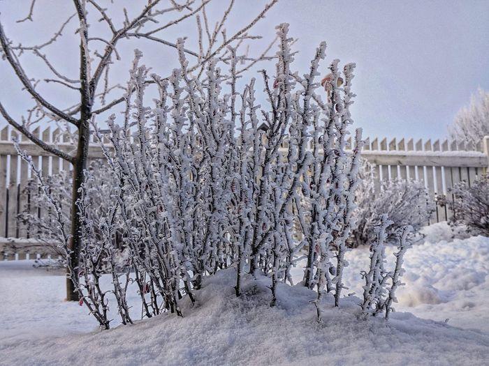 Winter_collectio