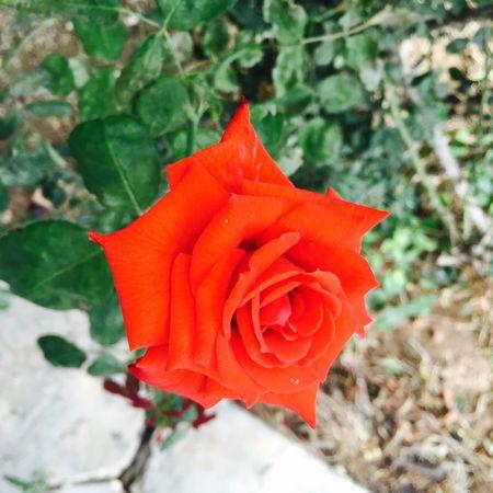 Flowers Flower Porn Flowers,Plants & Garden EyeEm Flower Red Red Flower Spring Flowers
