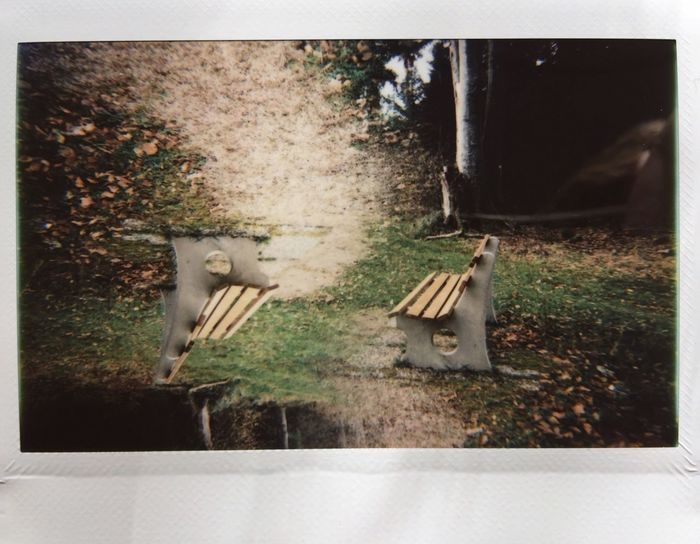 Instax Wide Lomo'Instant Wide Lomography Animal Themes Tree Nature Outdoors Grass No People Day Upside Down Topsy Turvy Blackforest Germany Schwarzwald Baden-Württemberg  Bench Beaty In Nature EyeEm Ready