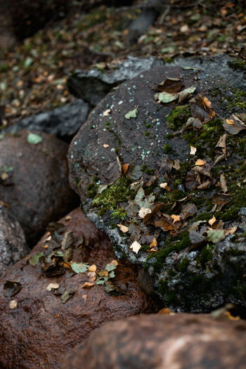 Selective Focus Close-up Solid No People Nature Rock Day Plant Growth Rock - Object Rough High Angle View Field Outdoors Textured  Land Moss Leaf Plant Part Tranquility Surface Level Lichen
