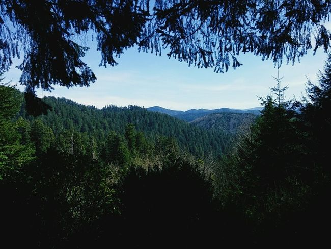View From The Top Trees Of Mystery California Redwoods Eye Spy Beautiful Nature Forest