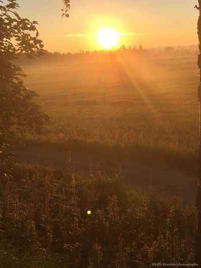 Midsummer day sunrise Sun Sunrise Sunrise_Collection Nature Nature_collection NoEditNoFilter Check This Out Hello World Taking Photos Enjoying Life Summer Summergirl  Love Landscape Photography Photooftheday