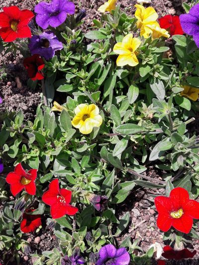 Close-up of flowering plants in park