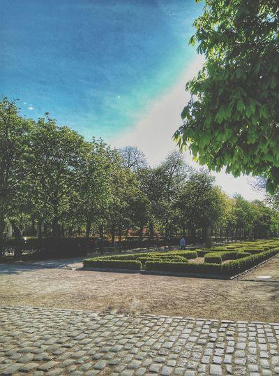Afternoon in the park Retiro Park Madrid Spain