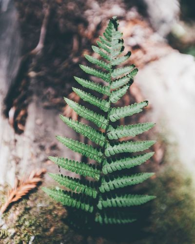 Life will find a way Green Color Growth Plant Nature Close-up No People A New Beginning
