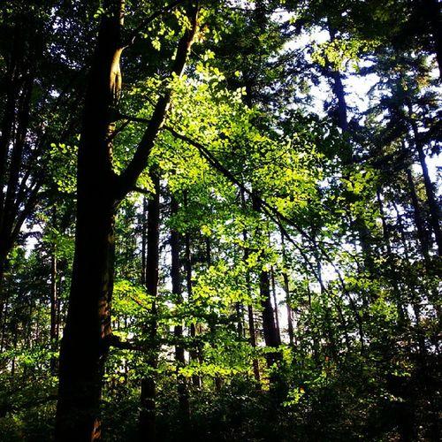 Prachtige licht inval op de bladeren in het bos bij het Lonnekermeer... God Schepping Natuur BOS bomen landschap mooi vrijheid fotografie liefdevoorfotografie