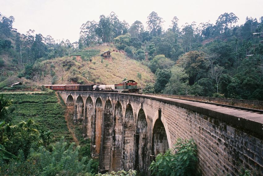 Miles Away Tree Bridge - Man Made Structure Built Structure Architecture Nature Day Growth No People Connection Arch Outdoors Forest Landscape Scenics Beauty In Nature Railway Bridge Architecture Railroad Train Sri Lanka Ella Travel Travel Photography Film Is Not Dead