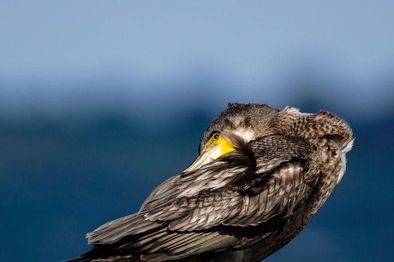 Close-up of egret against sky