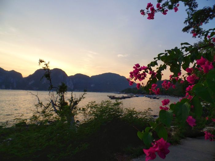 Mountain Water Flower Nature Sunset Beauty In Nature Day Sky Thailand PhiPhiIslands sunset
