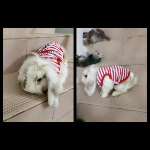 haha.so cute(^ω^) I Love My Pets Cute Pets My Rabbit Rabbit