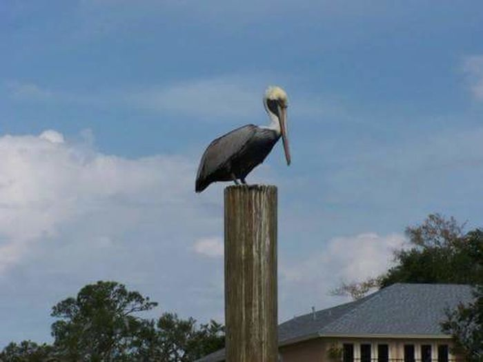 Pelican carving in Oce Birdan Springs, MS Animal Wildlife Stork Animals In The Wild One Animal Sky No People Outdoors White Stork Day Nature Perching