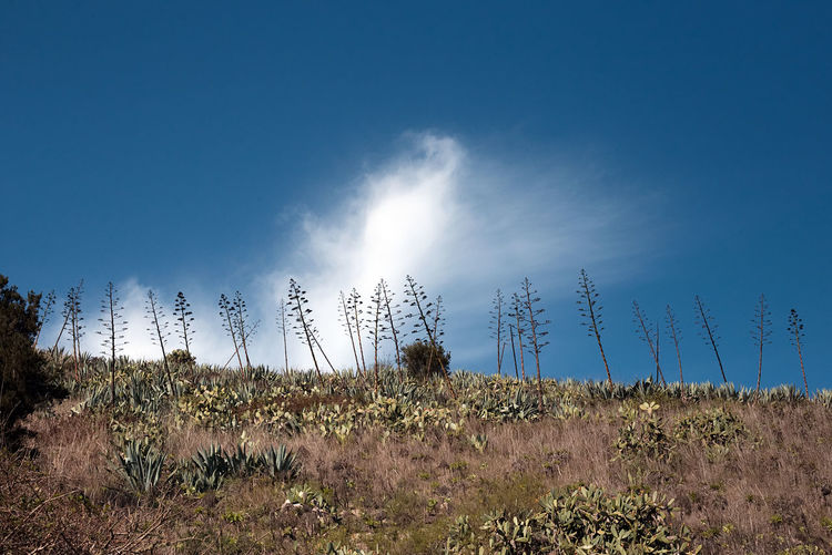Canary Islands Agave Beauty In Nature Blue Blue Sky Canon Clear Sky Day Grass Growth Landscape Nature No People Outdoors Plant Scenics Sky Tranquility Tree
