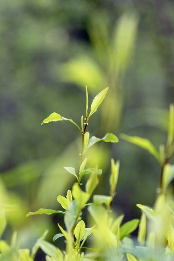 green plant close up Growth Plant Green Color Beauty In Nature Nature Day Plant Part Leaf Close-up No People Invertebrate Focus On Foreground Insect Selective Focus Animals In The Wild Animal Wildlife Animal Themes Outdoors Animal One Animal