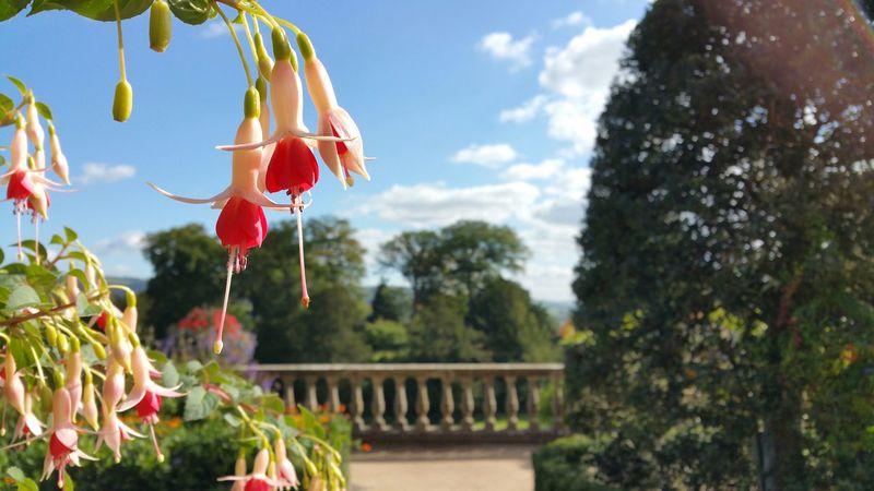 Flowers Sunshine Enjoy Life Gardens Smartphonephotography Samsung Galaxy Note 4 Samsungmobile Welshpool Wales