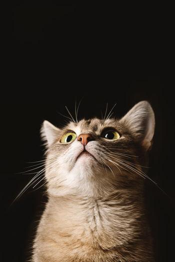 Portrait of cat against black background