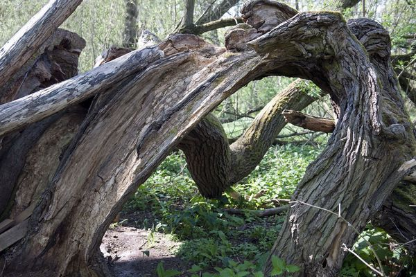 Damaged Forest Nature Old Outdoors Tree Tree Trunk Wood Wooden