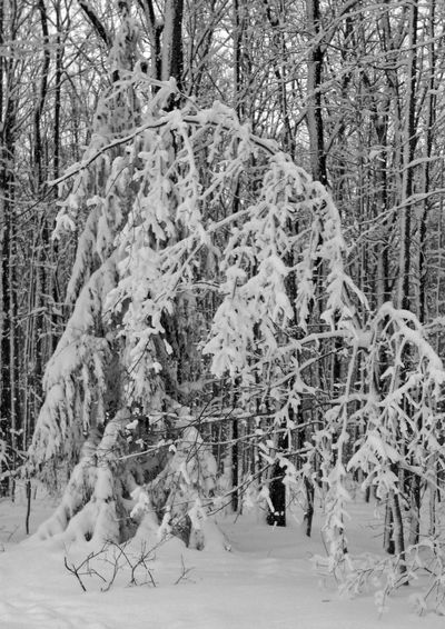 Beauty In Nature Cold Temperature Ellicottville, NY Enjoying Life EyeEm Best Shots Forest Hanging Out Hello World Landscape Nature Outdoors Relaxing Scenics Season  Skiing Snow Taking Photos Taking Pictures Tranquil Scene Tranquility Tree Tree Trunk Weather Winter WoodLand