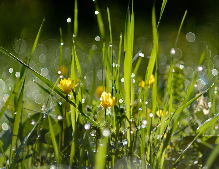 Green Color Nature Outdoors No People Grass Flower трава травы Grass цветок  Dew Dew On Grass Sunlight Sparks Sun Sparks Of Dew