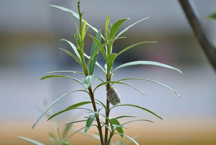 Leaf Plant Outdoors Nature No People Flower Growth Close-up Palm Tree Day Fragility Defocused Beauty In Nature Tree Food Freshness Pupa Pupa: Chrysalis Transitions To Butterfly