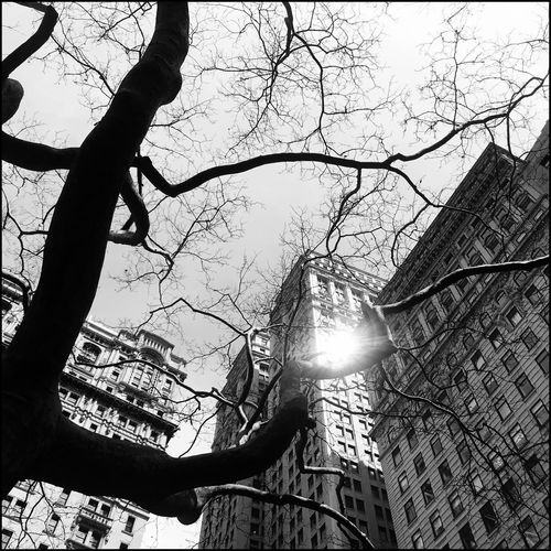 Blackandwhite Skyline Skyscraper New York Architecture Kris Demey Photography Tree Low Angle View Branch Sky Plant Nature Sunlight Built Structure Day No People Sun Tree Trunk Architecture Trunk Sunbeam Growth Outdoors Silhouette Beauty In Nature Building Exterior