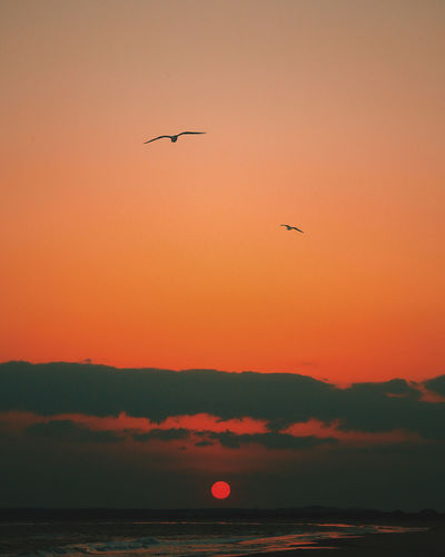 Animal Themes Animals In The Wild Beauty In Nature Bird Day Flying Mid-air Mountain Nature No People Outdoors Scenics Sea Silhouette Sky Spread Wings Sunset Tranquil Scene Tranquility Water