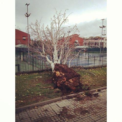 El poder destructivo del viento Viento Wind Winter